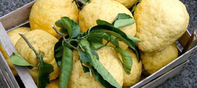 Le citron des Cinque Terre