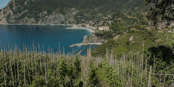 Vignes Cinque Terre